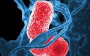 tratament pentru ameliorarea pneumoniei