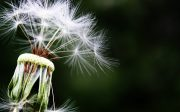 combaterea alergiilor